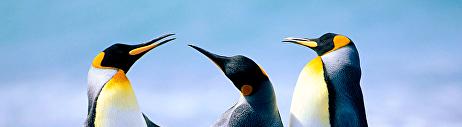 แพนกวิน
